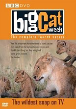 BigCatWeek_Series4_220_Nice.jpg (13211 bytes)